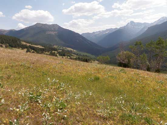 Vancouver hiking trails South Chilcotin wildflowers