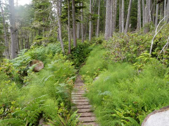 Juan de Fuca Trail boardwalk on the trail